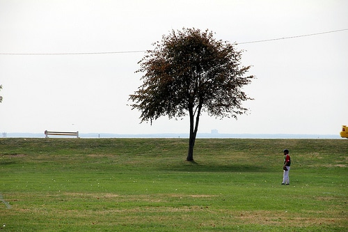 Tree and Baseball, by Ingrid Spangler