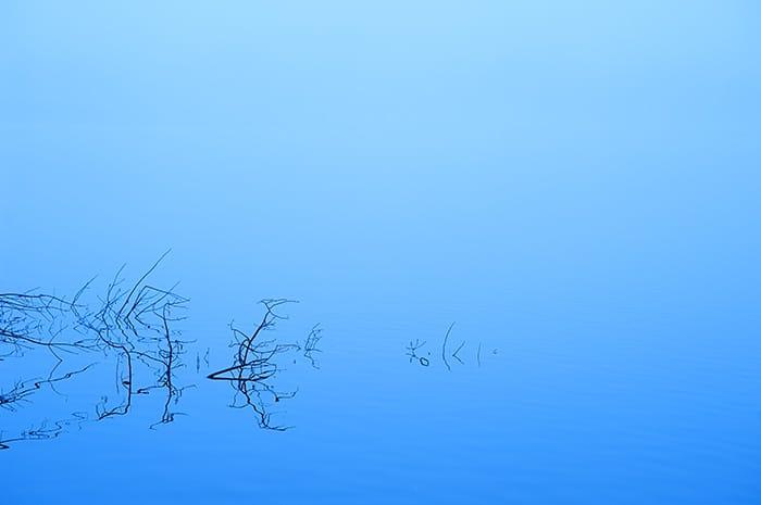 Foggy Morning   Sandy Hook Memorial Fund