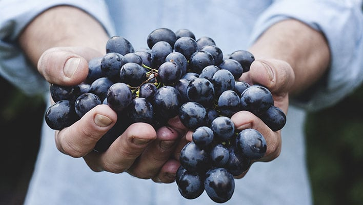 Grapes, Nutrition