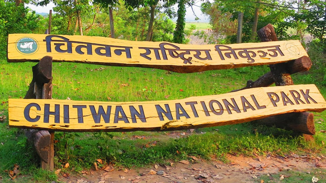 Chitwan National Park Rules and Regulation - Tiger Encounter   Tiger  Encounter