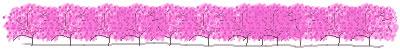 ネットショップ、webデザインの飾り罫のフリー素材:春らしいサクラ並木のイラストの飾り罫のwebデザイン素材(400×50pix)