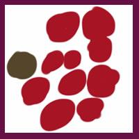 web制作、ネットショップ運営、webデザインのフリー素材:アイコン(twitter,mixi);大人かわいいくすんだ赤色の北欧風の花みたいな水玉のイラスト(枠付き)