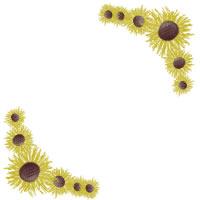 フリー素材:バナー広告,アイコン素材;ガーリーな向日葵(ヒマワリ)の花いっぱいのフレームのイラストのwebデザイン素材