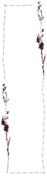 フリー素材:バナー広告制作;大人可愛い茶色の北欧風デザインの木の枝と葉っぱとラフなラインの飾り枠のイラスト(160×600pix)