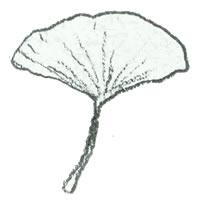 フリー素材:アイコン(twitter,mixi,ブログ);北欧風のシンプルなモノクロの木の葉(イチョウ);200×200pix