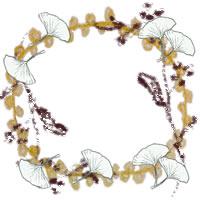 フリー素材:アイコン(twitter,mixi,ブログ);モノトーンの木の葉(イチョウ)と枝と芥子色のレース;200×200pix