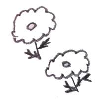 フリー素材:アイコン(twitter):北欧風の2輪のひな菊の鉛筆画のガーリーイラスト;200×200pix