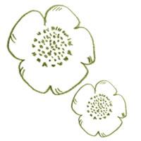 アイコン(twitter)のフリー素材:北欧風の大人可愛い若草色のケシの花の色鉛筆画のイラスト;200×200pix