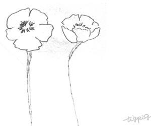 モノトーンの大人可愛いケシの花のフリー素材:バナー広告;300×250pix