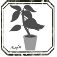 HP制作,twitter,Lineのアイコンに使える大人可愛い観葉植物のイラストのフリー素材