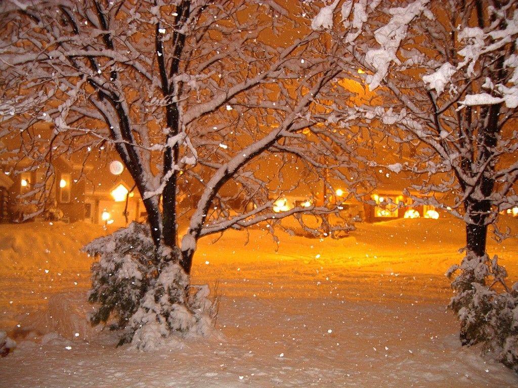 Po sie en couleurs l automne et l hiver espace d tente po sie juda sme et lutte contre la - Couvrir arbuste pour l hiver ...