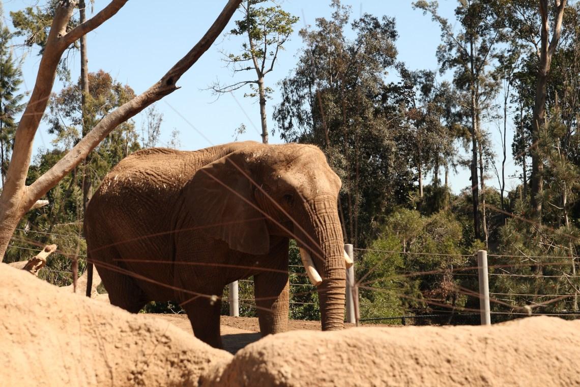 Cheap San Diego Zoo Tickets