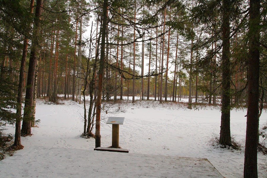 Lahemaa national park in winter