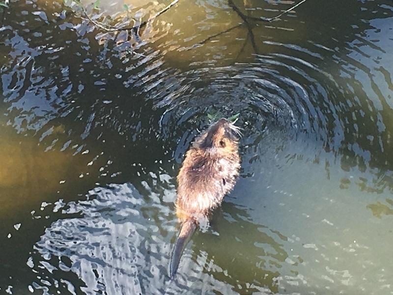 Prague walking itinerary beaver