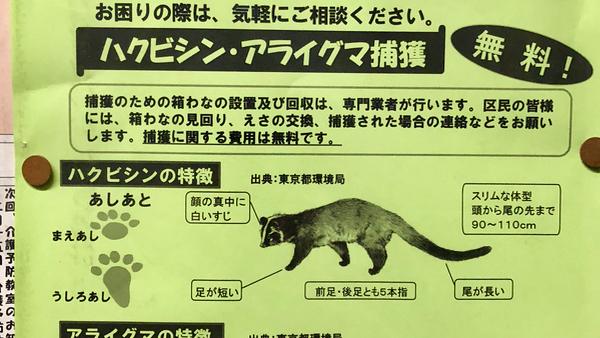 大田区助成 捕獲無料 ハクビシン、アライグマの被害でお困りの方へ