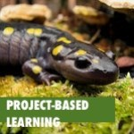 real-world problems and project-based learning