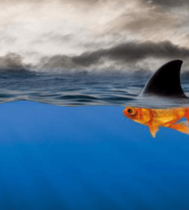 Image of shark fin above water attached to a goldfish below water.