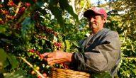 ما هي البيئة المناسبة لزراعة البن
