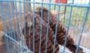 أين يقع سوق الجمعة للحيوانات الأليفة في مصر