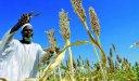 ما هي عوائق الزراعة في السودان