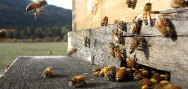 كيف تبدأ مشروع منحل عسل