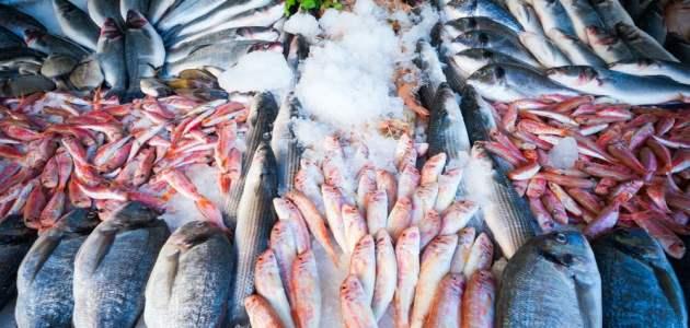 تأسيس محل بيع أسماك في ألمانيا