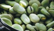 مواسم زراعة الفول الأخضر وطريقة زراعة الفول