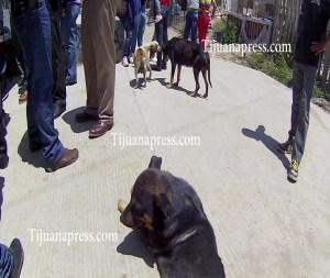 perros con garrapatas