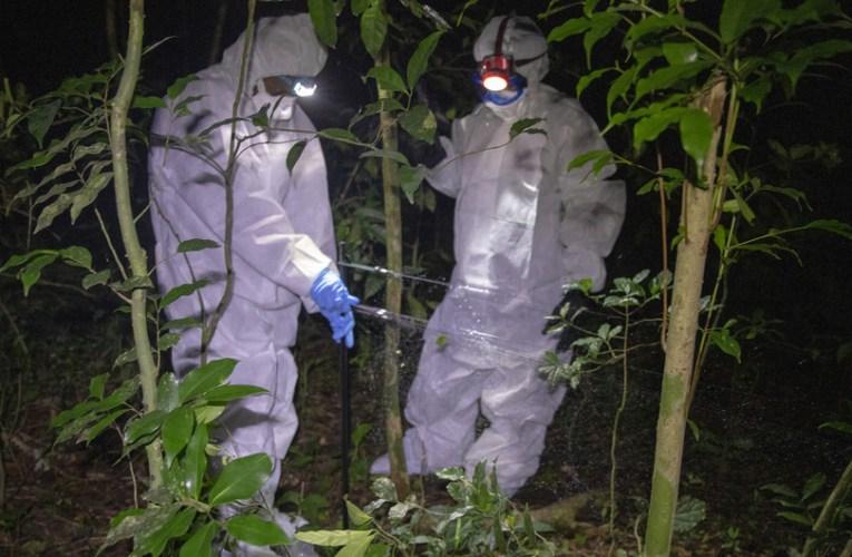 Virus desconocidos podrían causar pandemias si no dejamos de explotar la naturaleza