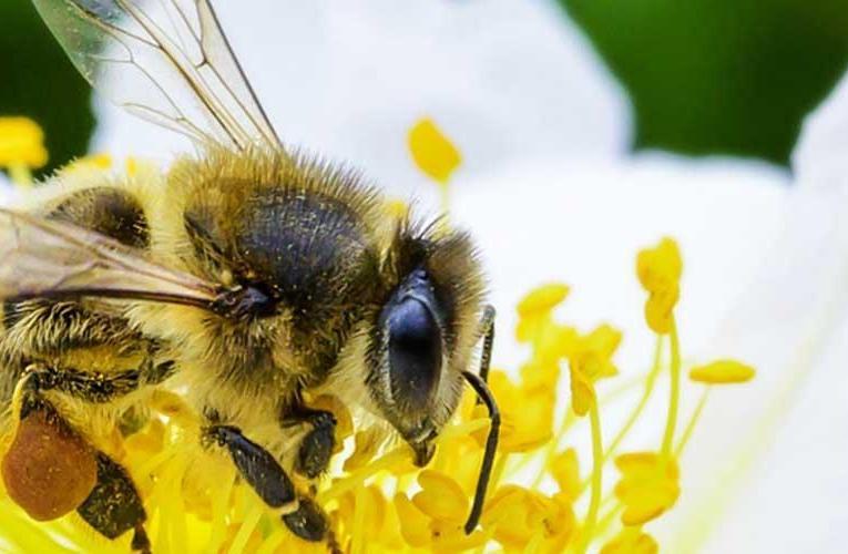 La vida de las abejas importa