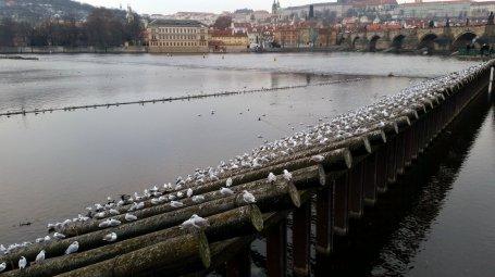 Praag (5)