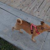 Struttin' on the Main Beach Boardwalk! Oh yeah!