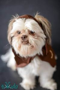 Easy Ewok No Sew Dog Costume Tutorial