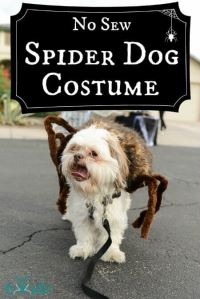 Spider Dog Halloween Costume Tutorial | Tikkido.com