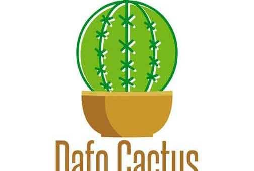 Dafo Cactus أزهار ونباتات  طرطوس
