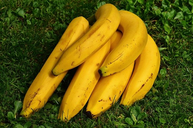子牛にバナナやヤクルトを与えるのは下痢防止に効果はある?