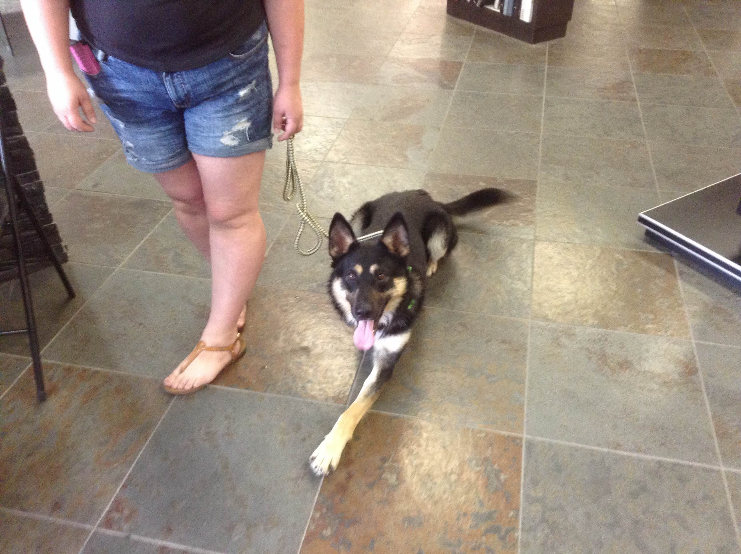 Max, a shepard from AARCs | SALE | Tile Stone Source