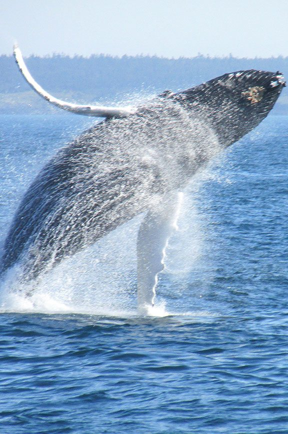 Whale Watching Off The Oregon Coast  Tillamook County