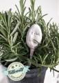 Växtetikett Dill