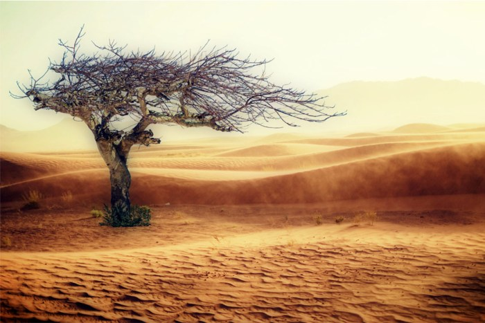 Astonishing deserts