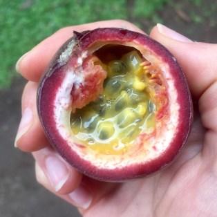 Passion Fruit / Maracuyá