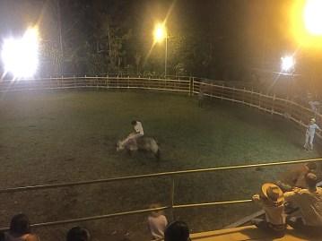 torro-fila-naranjo