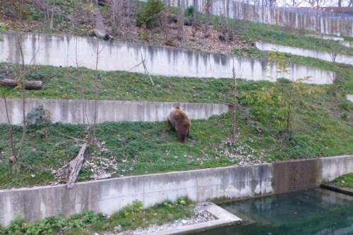 BärenPark - Resident