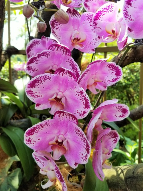 National Orchid Garden at the Singapore Botanical Gardens