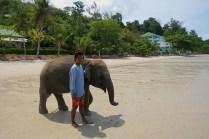 Strandelefant vor dem Bad