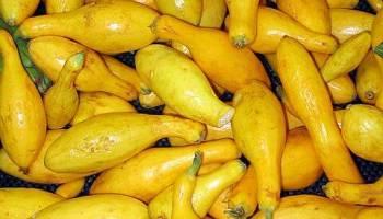 Yellow_squash