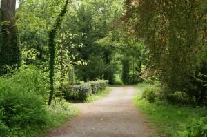 Iireland: A Path
