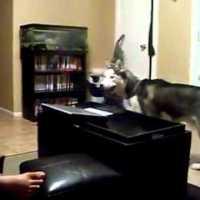 Cão com medo da Julia Roberts