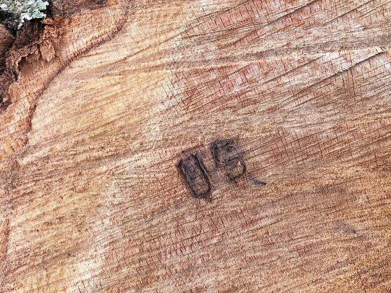 Log branded with the letters US, for United States, identifying the logs as coming from federal land.