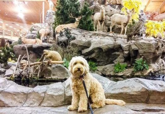 Pets Welcome: Dog Friendly Stores in Cincinnati - Timberidge